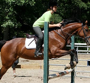 East Coast Equestrian Training