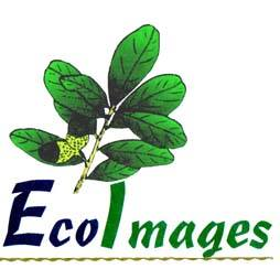 Eco Images