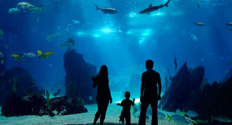 Virginia Beach Aquarium - Funfor all ages