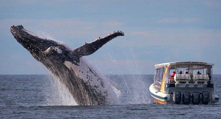 Winter Whale Watching Virginia Beach Va