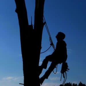 Tree Service Pros VA Beach