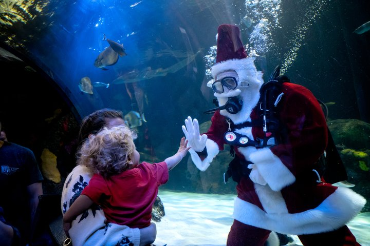 The Virginia Aquarium-Holiday Fun in Virginia Beach