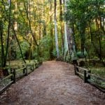 Guided Forest Bathing in Chesapeake Arboretum – Hampton Roads